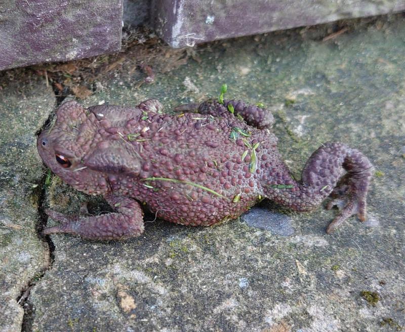 жаба 1.jpg