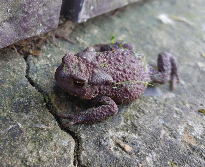 жаба 2.jpg