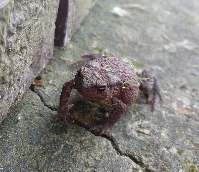 жаба 5.jpg