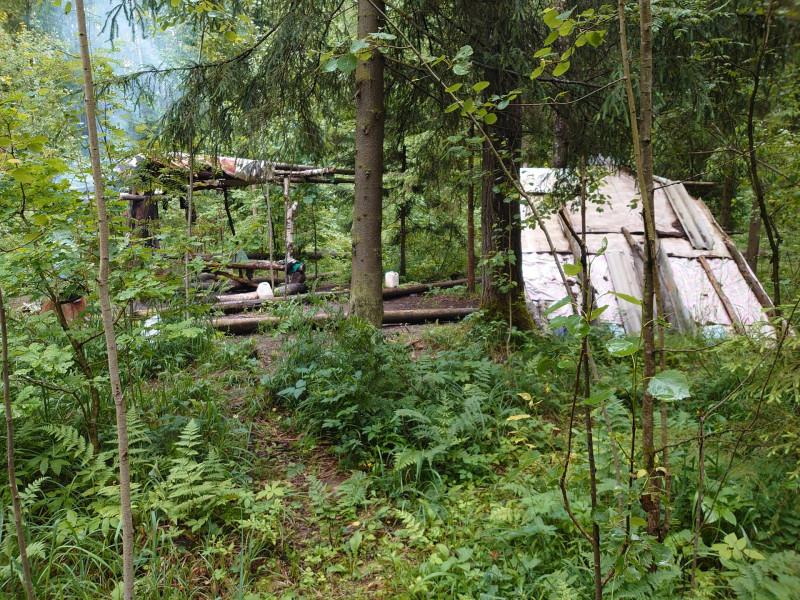Жители леса 2.jpg