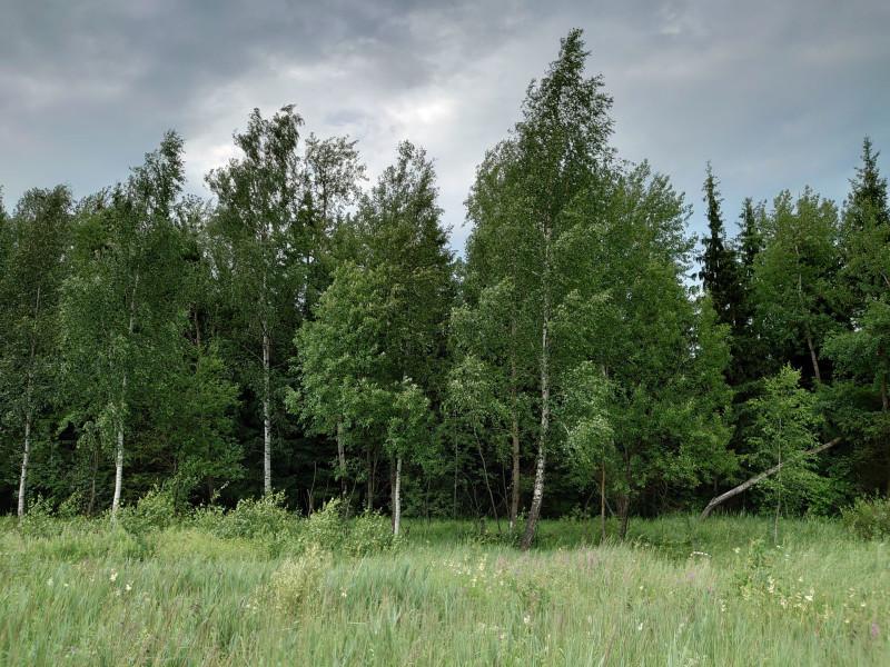 Лес 4 июля 2020 8.jpg