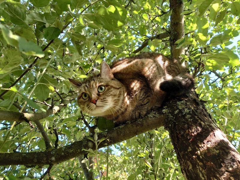Джойка на дереве 30 июля 2.jpg