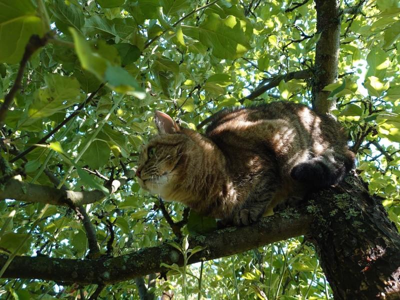 Джойка на дереве 30 июля 3.jpg