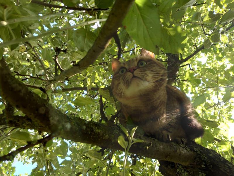 Джойка на дереве 30 июля 4.jpg