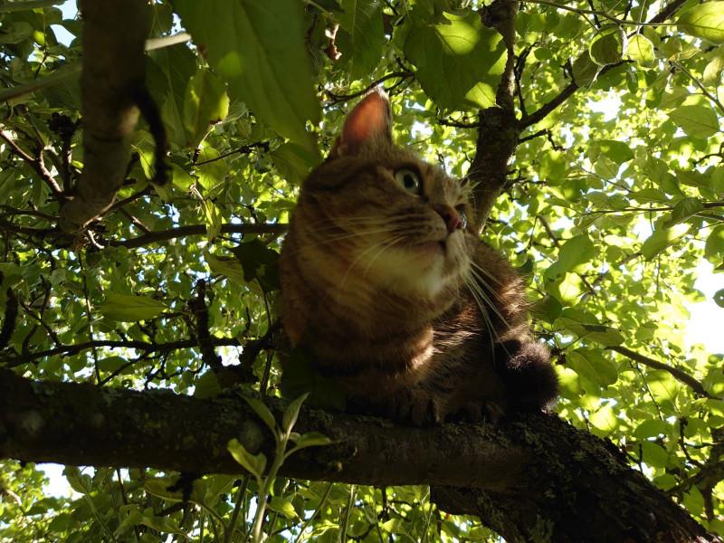 Джойка на дереве 30 июля 5.jpg