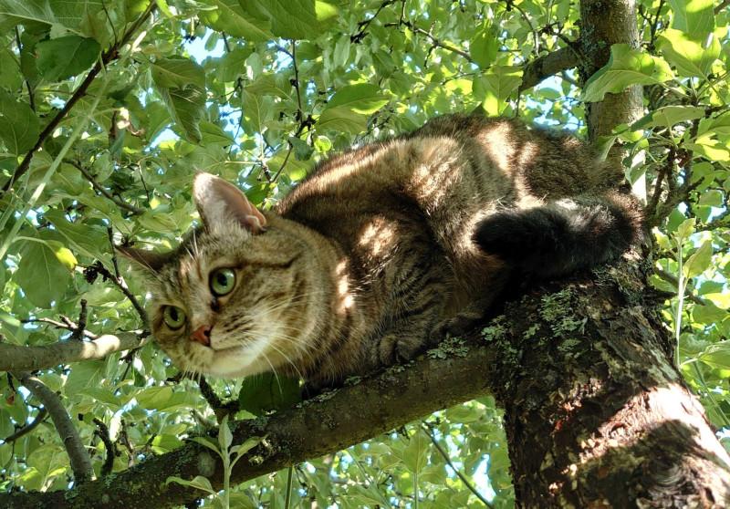 Джойка на дереве 30 июля 2020 1.jpg