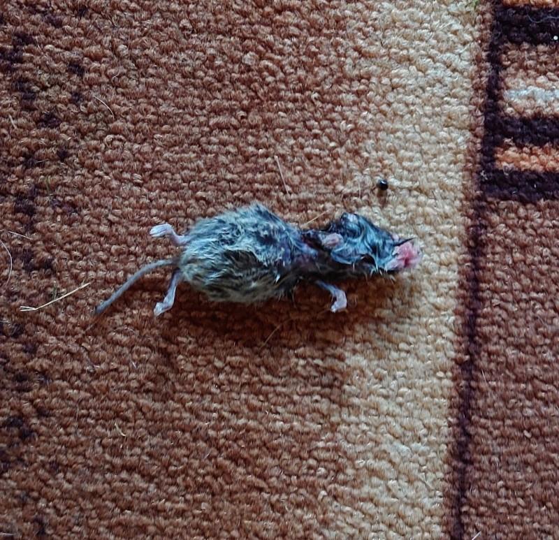 ДЖойка и мыши 1.jpg
