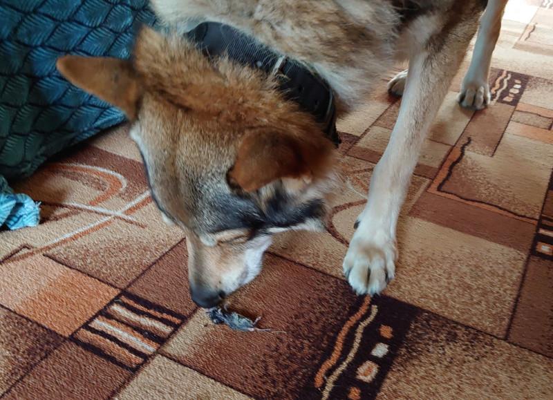 Канис и мышь 1.jpg