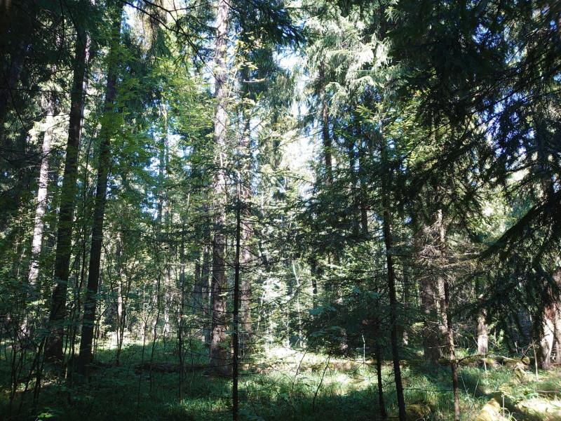 лес 22 августа 2020 2.jpg