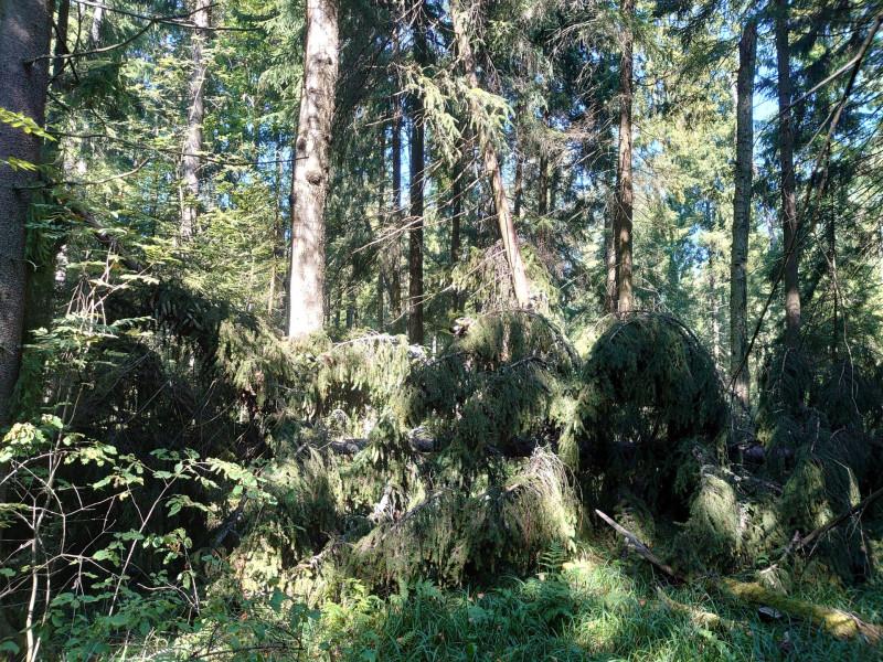 лес 22 августа 2020 3.jpg