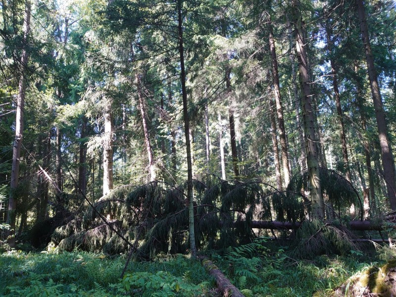 лес 22 августа 2020 4.jpg