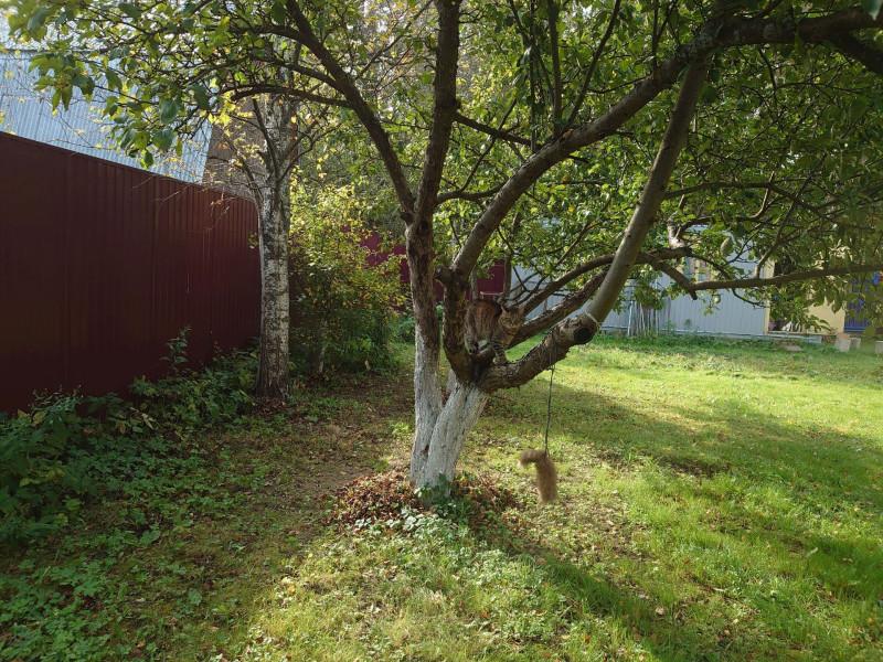 Джойка на дереве 27 сентября 2020 1.jpg