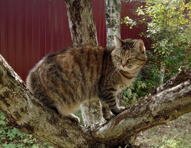 Джойка на дереве 27 сентября 2020 6.jpg