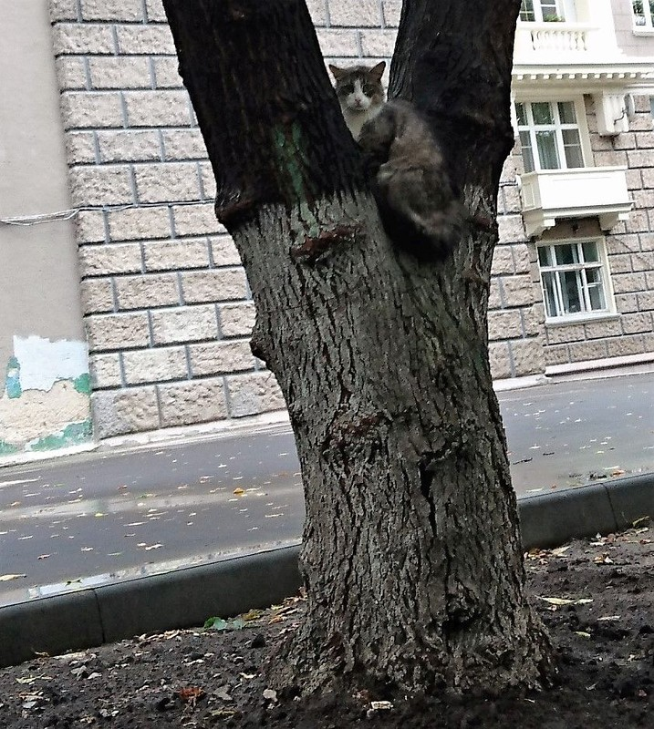 кот на дереве 1.jpg