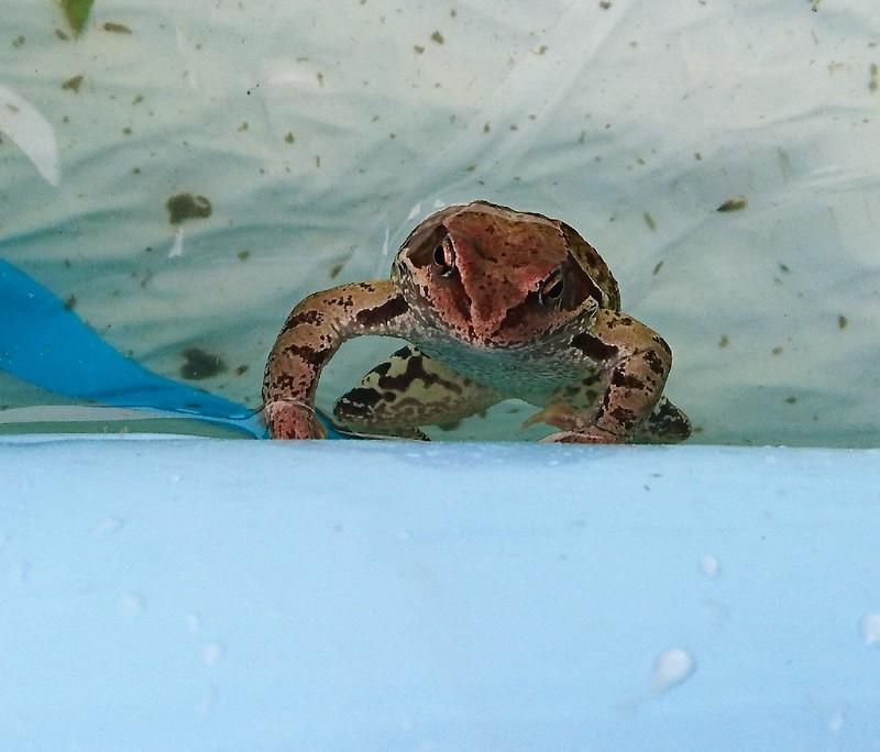 лягушки 8.jpg