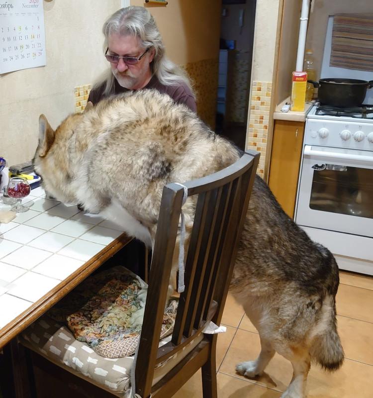 Канис помогает хозяину завтракать 1.jpg