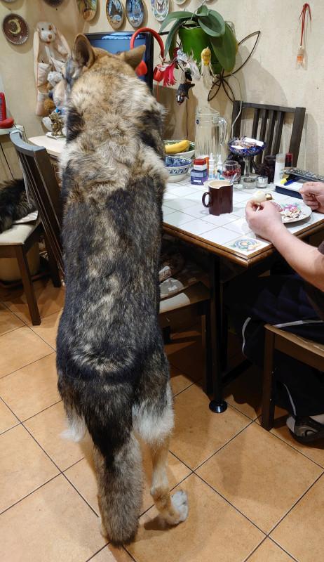 Канис помогает хозяину завтракать 5.jpg