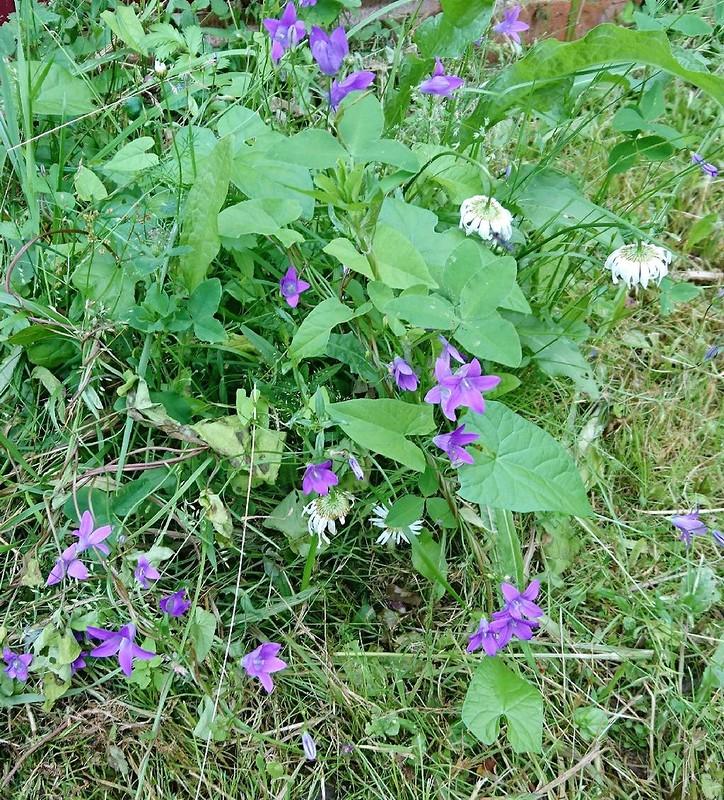 цветы 23 июля 2017 1.jpg