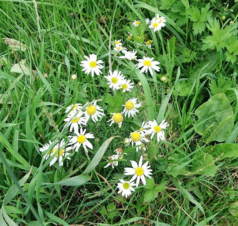 цветы 23 июля 2017 5.jpg