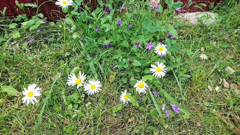 цветы 23 июля 2017 2.jpg