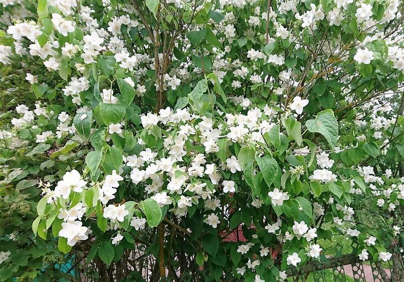цветы 23 июля 2017 4.jpg