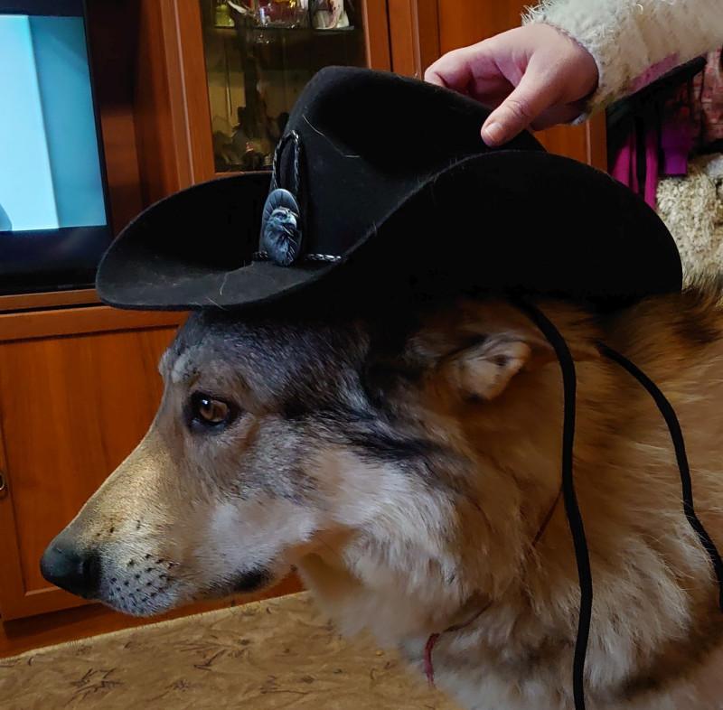 Канис в шляпе 3 декабря 2020 2.jpg