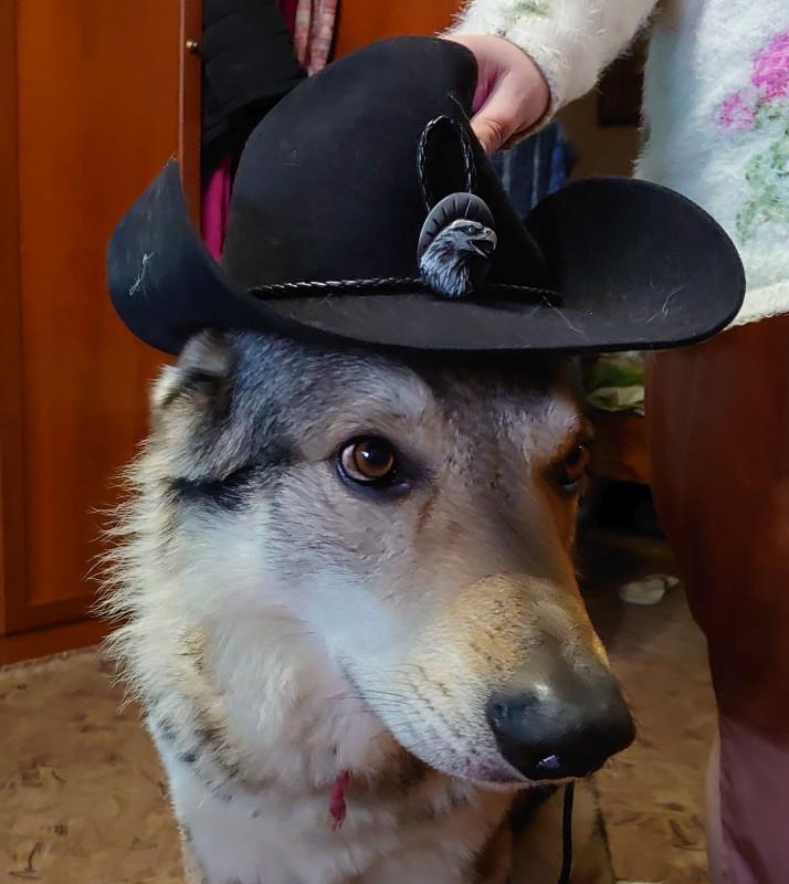 Канис в шляпе 3 декабря 2020 3.jpg