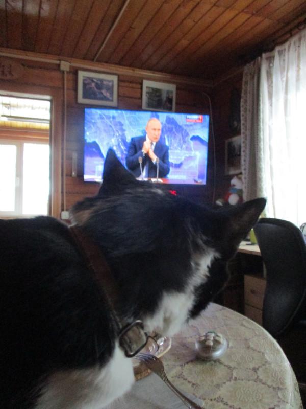 Кот и Путин.jpg