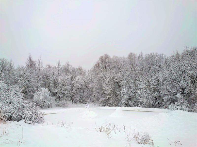 Зимний лес 2 января 2021 2.jpg