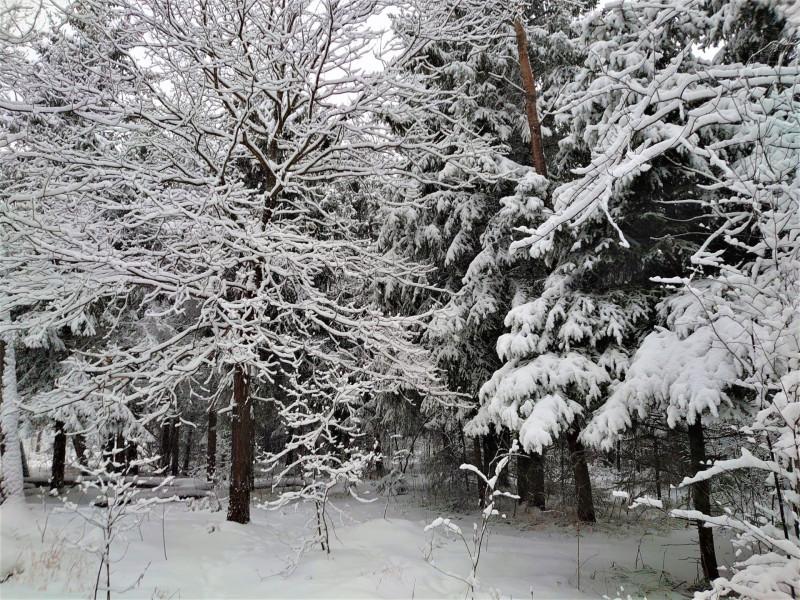 Зимний лес 2 января 2021 9.jpg