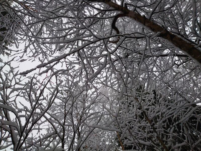 Зимний лес 2 января 2021 11.jpg
