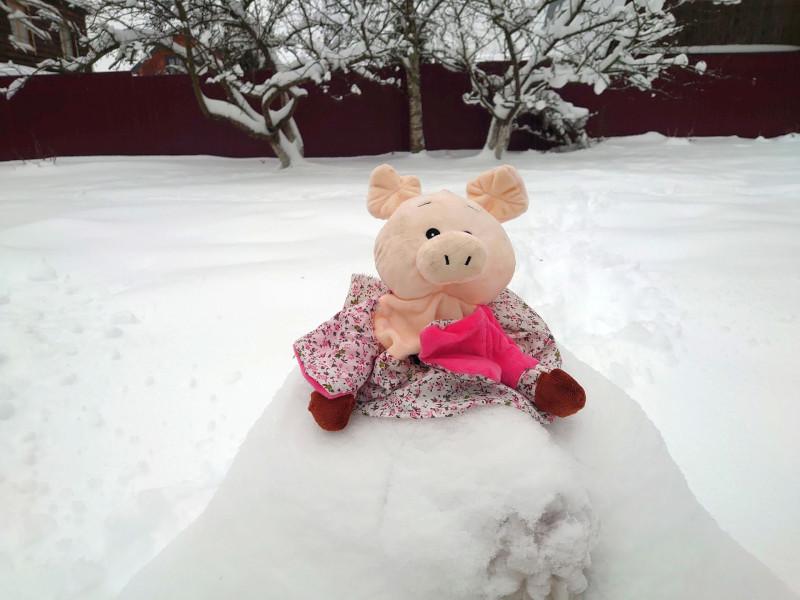 Хрюшка на снегу 1.jpg