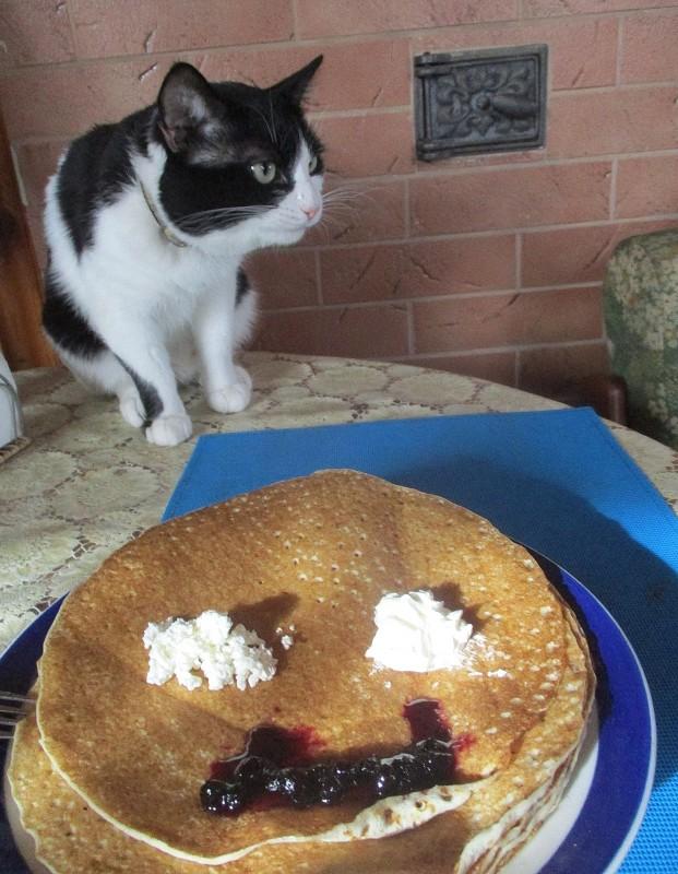 кот и блины 3.jpg
