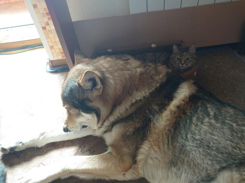 Канис и кошки 13 апреля 2021 4.jpg