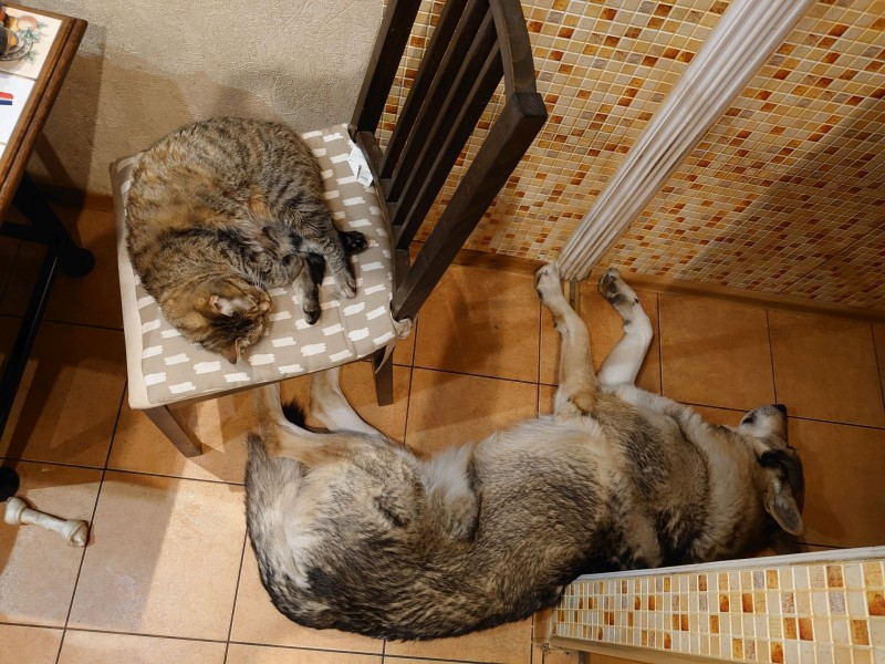 Канис и кошки 13 апреля 2021 1.jpg