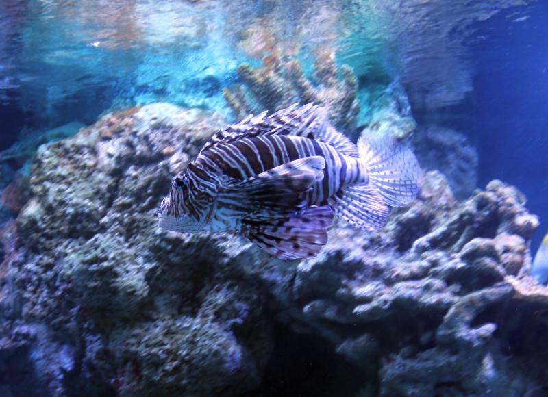 Рыба бабочка 2.jpg