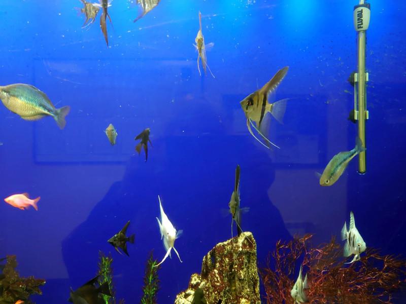 Рыбки 13.jpg