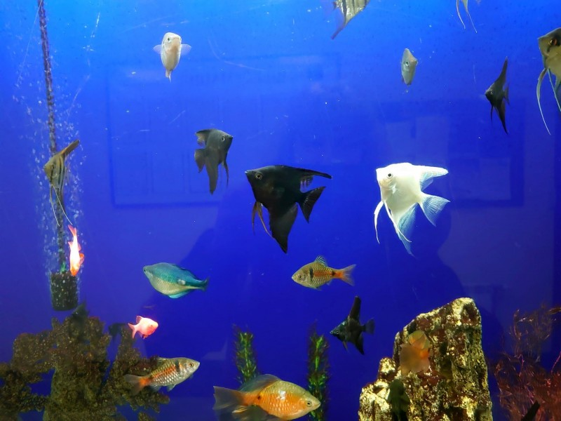 Рыбки 12.jpg