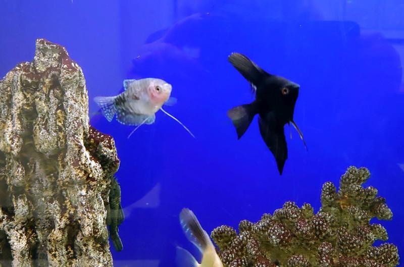 Рыбки 11.jpg