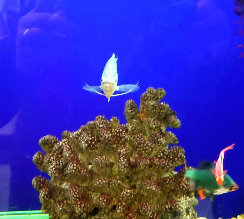 Рыбки 7.jpg