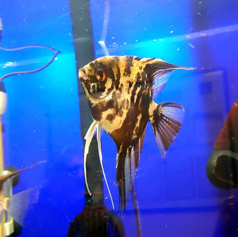 Рыбки 3.jpg