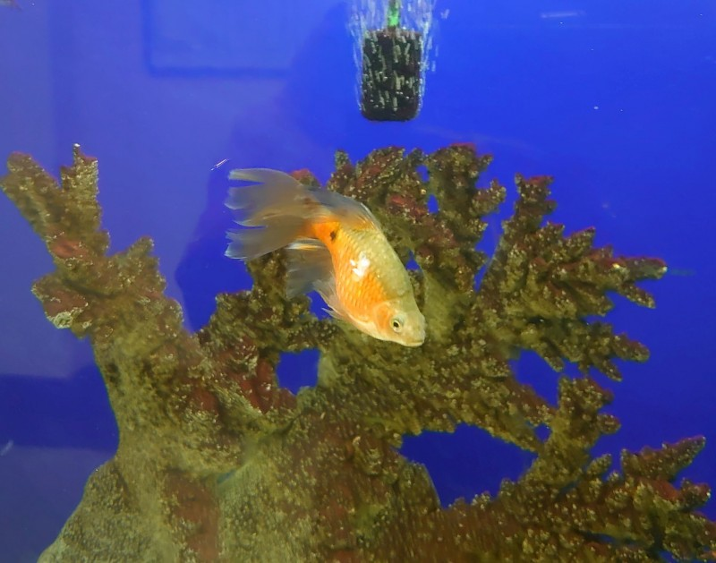 Рыбки 2.jpg