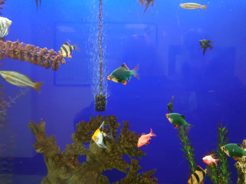 Рыбки 1.jpg