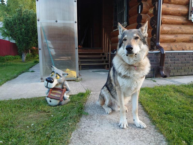 Канис и волк 6 июня 2021 2.jpg