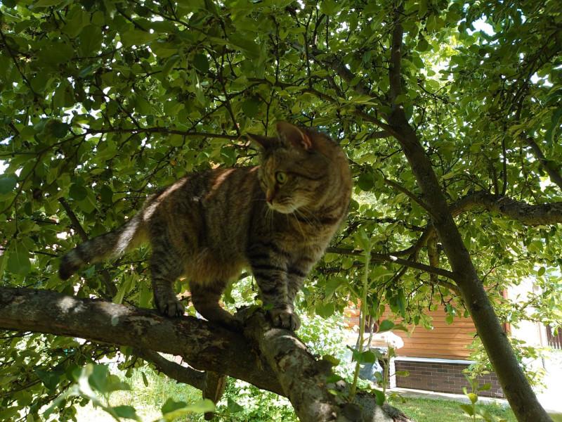 Джойка на дереве 13 июня 2021 3.jpg