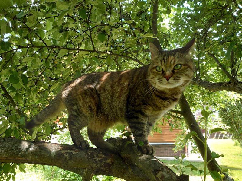 Джойка на дереве 13 июня 2021 5.jpg