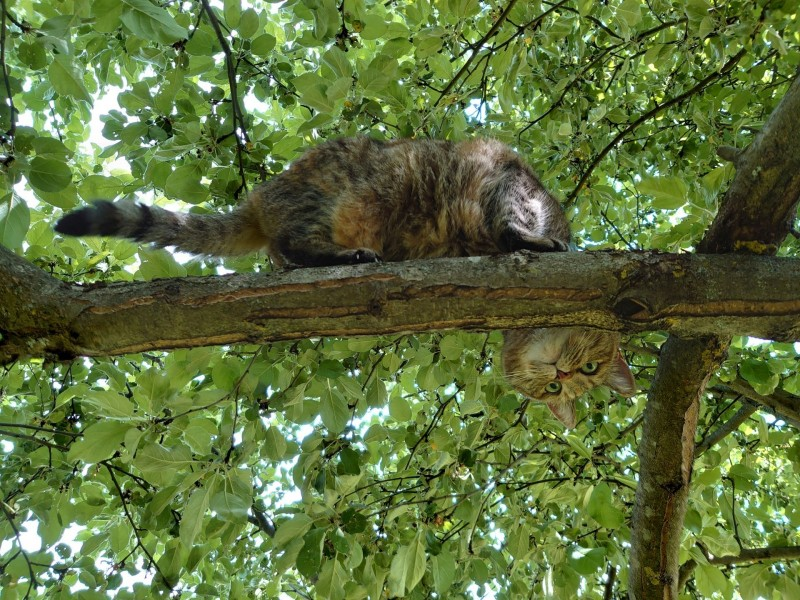 Джойка на дереве 13 июня 2021 8.jpg