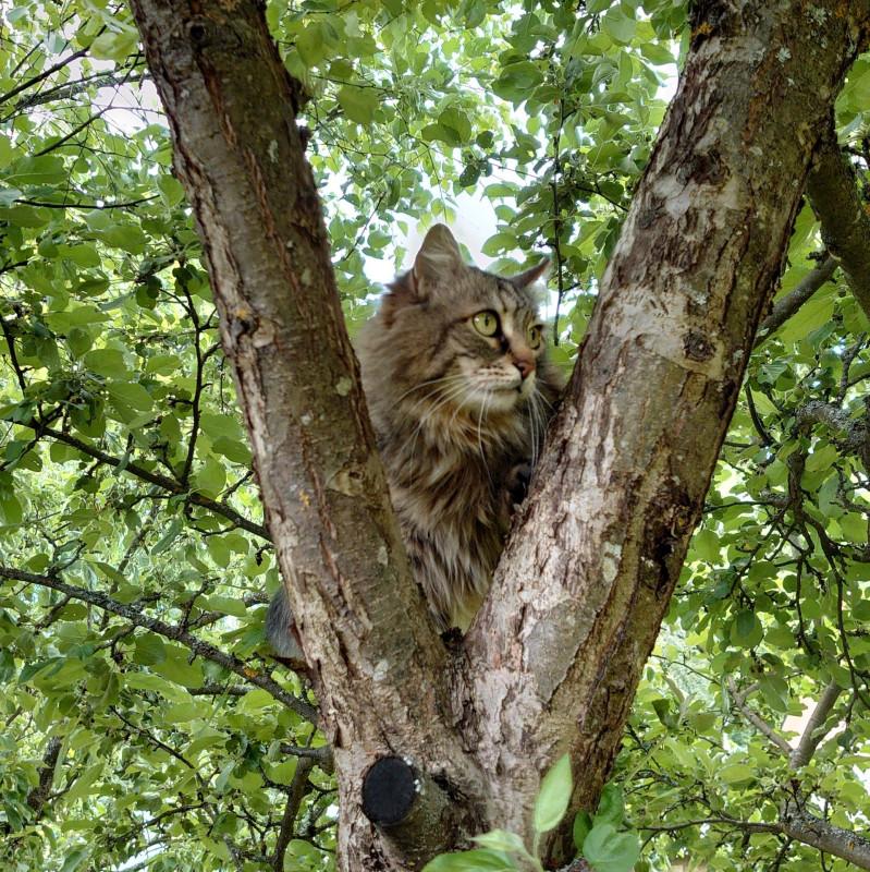 Ульси на дереве 13 июня 2021 3.jpg