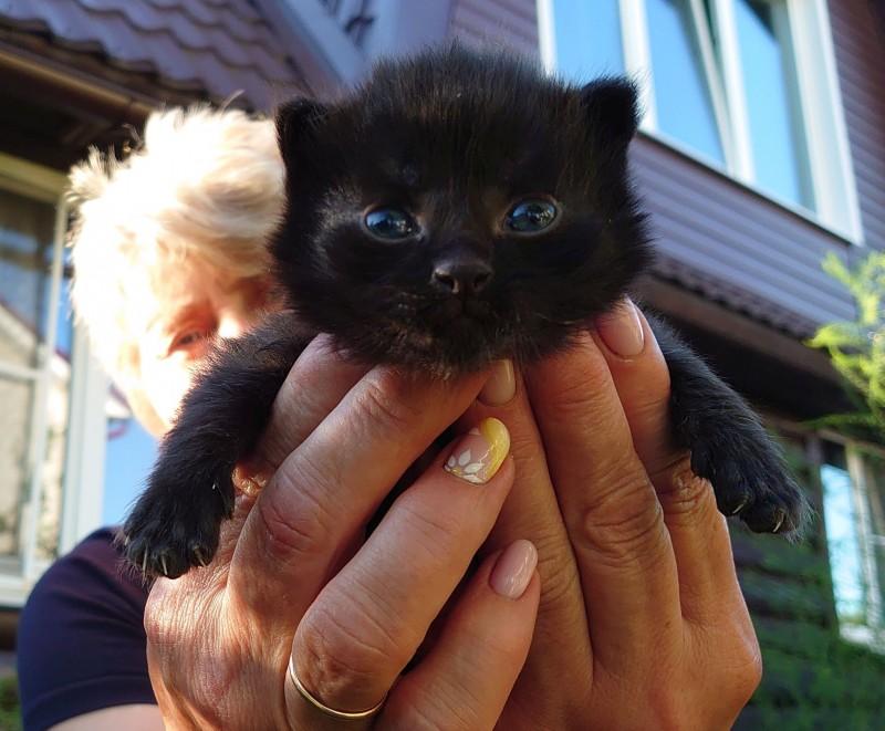 4 котенок 2.jpg