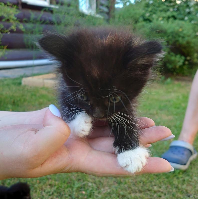 7 котёнок 2.jpg